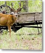 Buck Wagon Metal Print