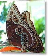 Buckeye Butterfly Metal Print