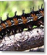 Buckeye Caterpillar 2 Metal Print