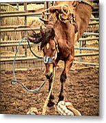 Bucking Metal Print by Caitlyn  Grasso