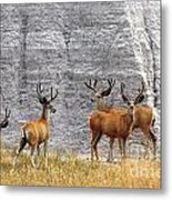 Bucks Abound Metal Print