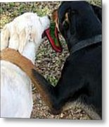 Buddies Sharing Metal Print