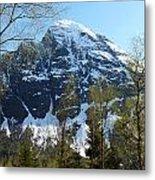 Buds And Glaciers  Metal Print