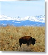Buffalo And The Rocky Mountains Metal Print