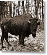 Buffalo Bill Metal Print