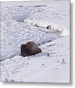 Buffalo In Snow   #6872 Metal Print