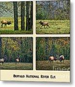 Buffalo National River Elk Metal Print