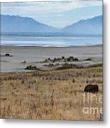 Buffalo Of Antelope Island V Metal Print
