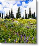 Buffalo Pass Colorado Wildflowers Metal Print