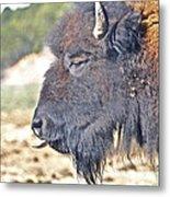 Buffalo Tongue Metal Print
