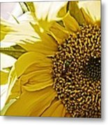 Bug In The Sunflower Metal Print