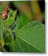 Bug On Leaf Metal Print
