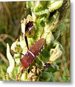 Bug On Stalk Of The Wooly Mullein Metal Print
