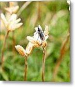 Bug On White Flower Metal Print
