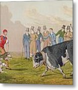 Bull Baiting Metal Print