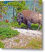 Bull Bison Near Mud Volcanoes In Yellowstone National Park-wyoming Metal Print