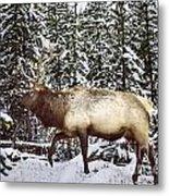 Bull Elk In The Woods Metal Print