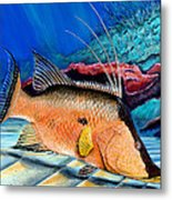 Bull Hogfish Metal Print