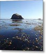 Bull Kelp Bay Metal Print