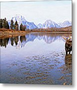 Bull Moose Grand Teton National Park Wy Metal Print