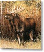 Bull Moose Metal Print by Karen Cade