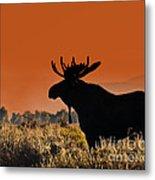Bull Moose Sunset Metal Print