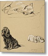 Bull-terrier, Spaniel And Sealyhams Metal Print