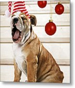 Holiday Bulldog Puppy  Metal Print
