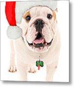 Bulldog Santa Metal Print