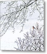 Bullfinch On A Snowy Branch Metal Print