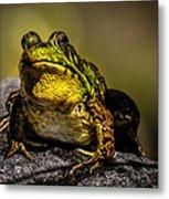 Bullfrog Watching Metal Print