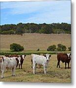 Bulls And Cow Metal Print