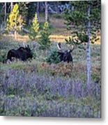 Bulls In The Meadow Metal Print