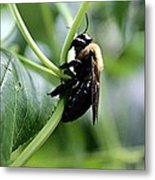 Bumble Bee 2 Metal Print