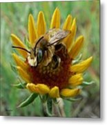 Bumble Bee Beauty Metal Print
