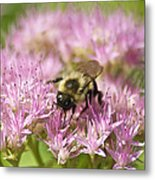 Bumble Bee On A Century Plant Metal Print