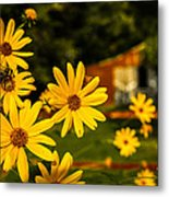 Bumble Bee On A Western Sunflower Metal Print