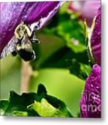 Bumble Bee Vii Metal Print