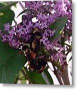 Bumble Bees In Flowers Metal Print