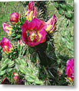 Bumble Cactus Flower Metal Print
