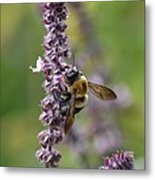 Bumble On Sage Metal Print