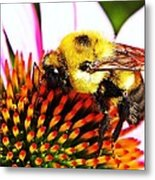 Bumblebee On Echinacea  Metal Print