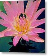 Bumblebee On Water Lily Metal Print