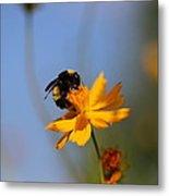 Bumblebee On Yellow Flower Metal Print