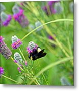 Bumbling Around Metal Print
