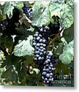 Bunch Of Grapes Metal Print by Heiko Koehrer-Wagner