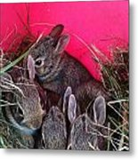 Bunnies In Pink Metal Print