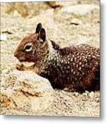 Bunny Squirrel Metal Print