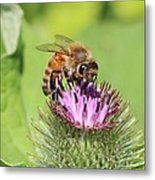 Burdock And Honeybee Metal Print