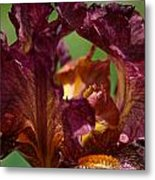 Burgundy Blossom Metal Print
